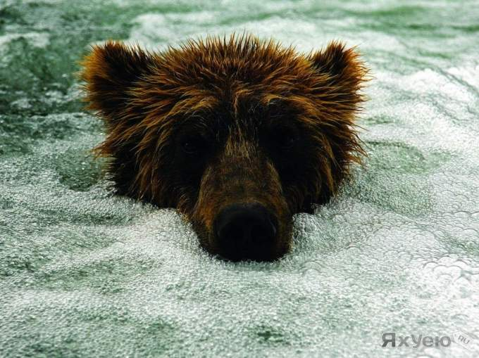 ������ ���������� National Geographic Russia � ����
